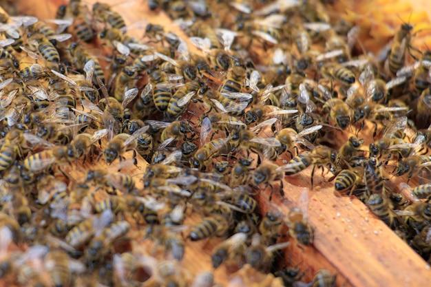 Primo piano delle api da miele su alveare sotto la luce del sole