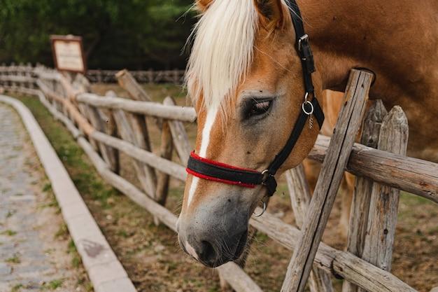 Primo piano di un cavallo accanto a una staccionata di legno in una fattoria