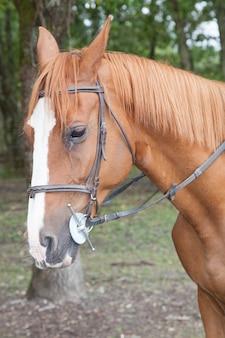 Closeup horse portrait