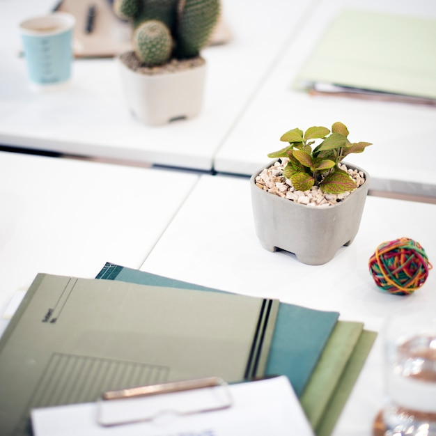 Closeup of houseplant on white table in office