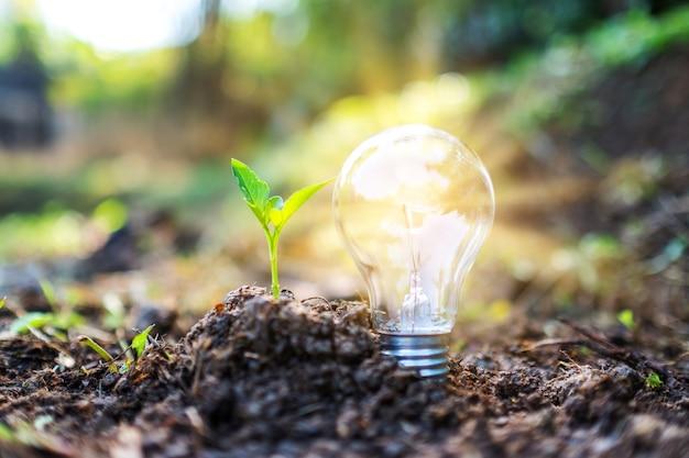 작은 나무와 흙 더미에 빛나는 전구의 근접 촬영 이미지