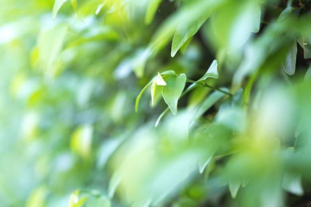 緑の葉の背景の拡大画像