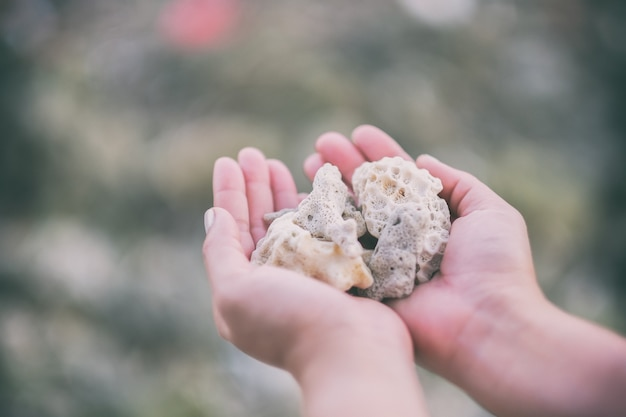 ビーチでサンゴを持って見せている手のクローズアップ画像