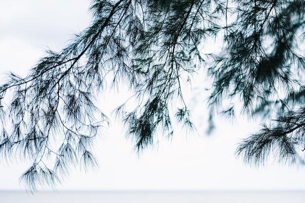 海沿いの松の木のクローズアップ画像