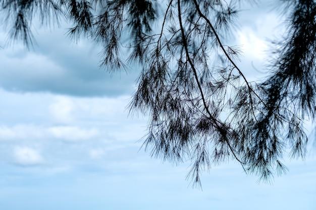 青い空を背景に松の木のクローズアップ画像