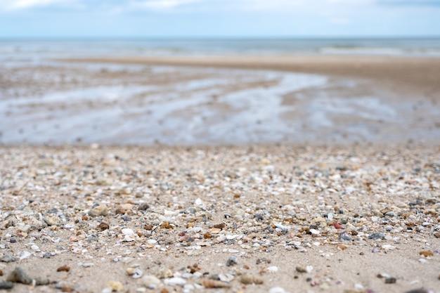 Closeup image of seashells on the beach