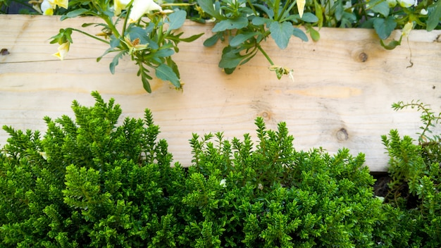 Closeup image of small decorative bushes and grass growing through wooden fence on building facade. copy space. place for your text. natural background