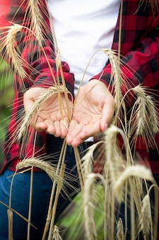 Closeup image of young female farmer holding ripe wheat ears in hands