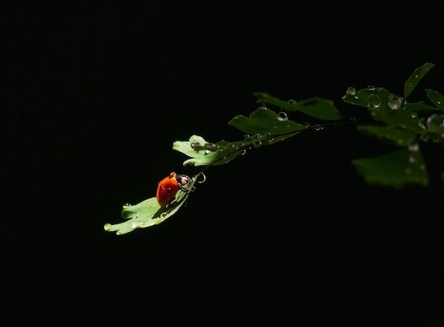 暗い背景の光のビームの葉のクローズアップてんとう虫