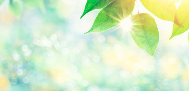 自然の背景をぼかした写真から空き容量のある晴れた日のクローズアップの葉と太陽光線。自然や夏の背景。