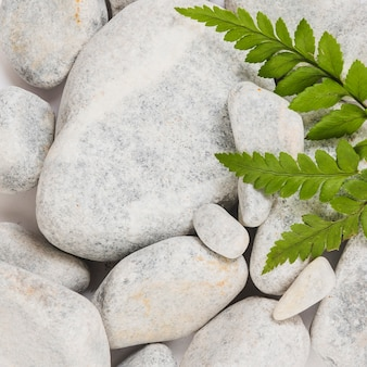 Closeup leaves on smooth stones