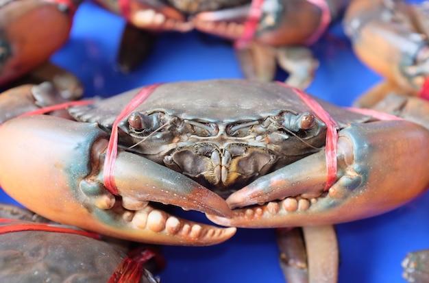 근접 촬영 라이브 크랩 해산물 시장, 태국.