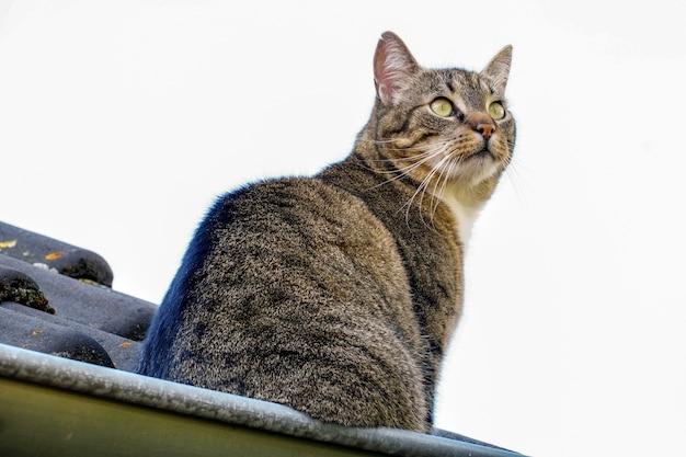 녹색 눈이 지붕에 서있는 아름다운 고양이의 근접 촬영 낮은 각도 샷