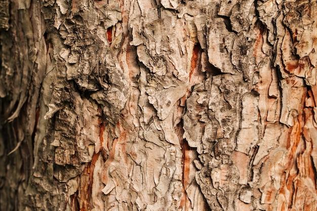 Closeup macro dry tree bark texture background