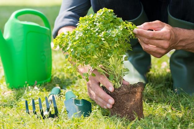 Closeup of man'planting plant Premium Photo