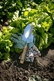 Closeup metal spade lying on garden bed with growing lettuce