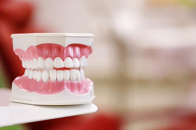 Крупным планом модель человеческой челюсти с белыми зубами