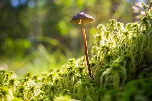 근접 촬영 버섯 숲 공원 낮은 초점 깊이 생태 환경에서 이끼와 함께 성장