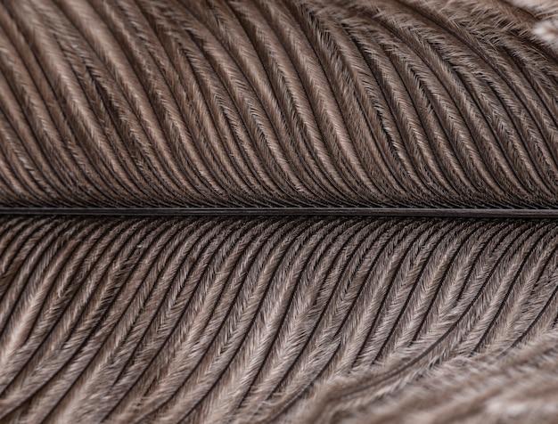 Closeup, narrow focus photography of a brown feather.