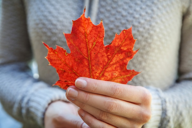 Closeup natural autumn fall view woman hands holding red orange maple leaf on park background. inspirational nature october or september wallpaper. change of seasons concept.