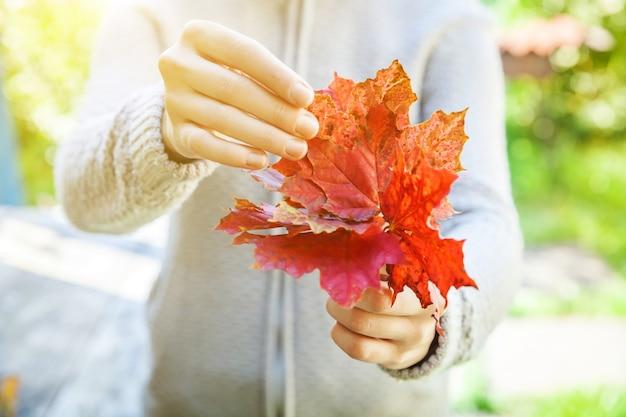 근접 촬영 자연가 보기 여자 손 공원 배경에 붉은 오렌지 단풍 잎을 들고. 영감을 주는 자연 10월 또는 9월 벽지. 계절 개념의 변화입니다.