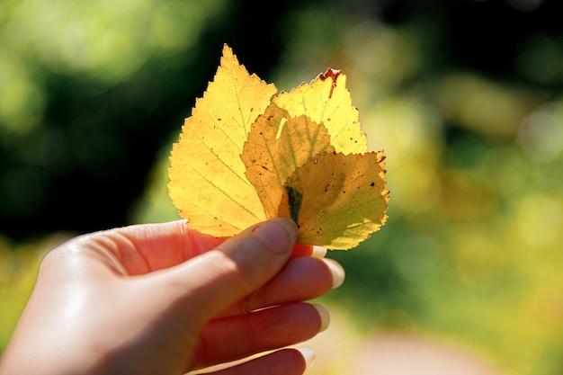 근접 촬영 자연 가을 보기 여자 손 어두운 공원 배경 영감에 노란 잎을 들고...