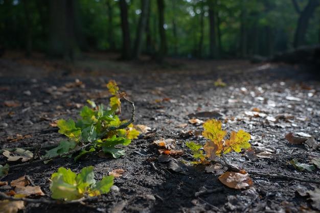 가을 또는 가을 낙엽의 근접 촬영 자연보기