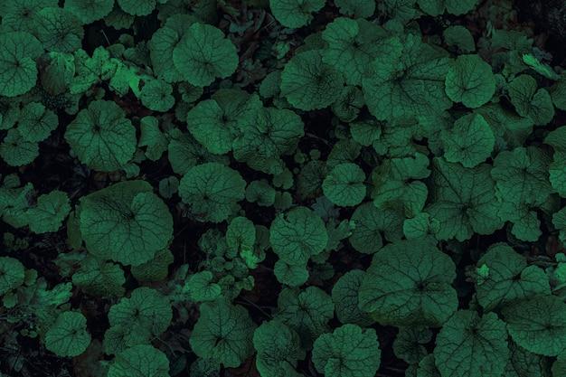 クローズアップ自然ビュー緑のエコ植物の葉のパターン。自然と植物のコンセプト、環境ときれいな空気。植物林