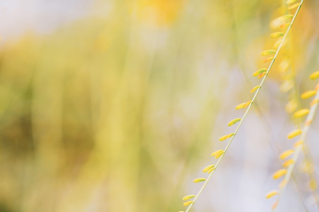 Closeup nature view of green leaf on  a beautiful nature bokeh background