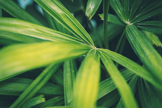 Closeup nature view of green leaves.