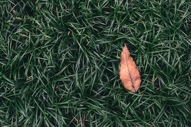 열 대 녹색 잎과 손바닥 배경의 근접 촬영 자연보기