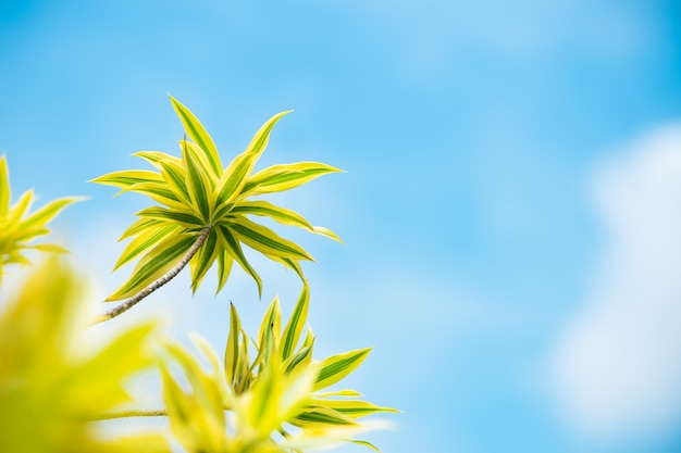 Closeup nature view of yellow plant on blue sky background with copy space