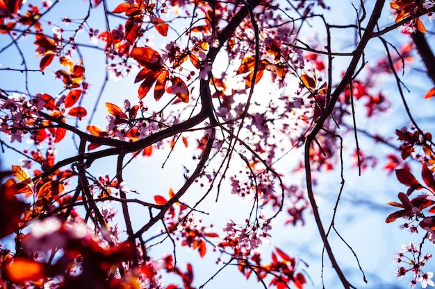 흐린 배경에 밝은 태양과 아름다운 벚꽃의 근접 촬영