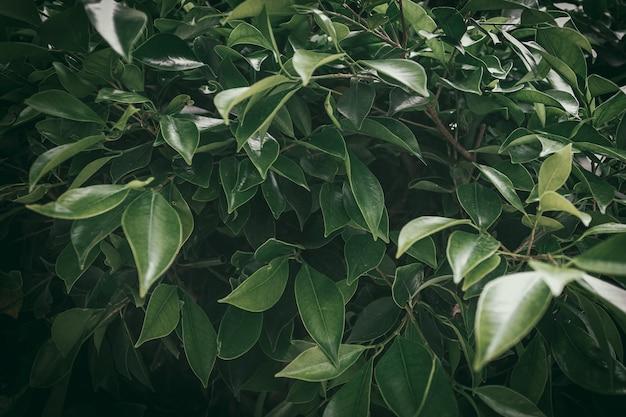 녹색 잎을 가진 아름 다운 신선한 부시 지점의 근접 촬영.