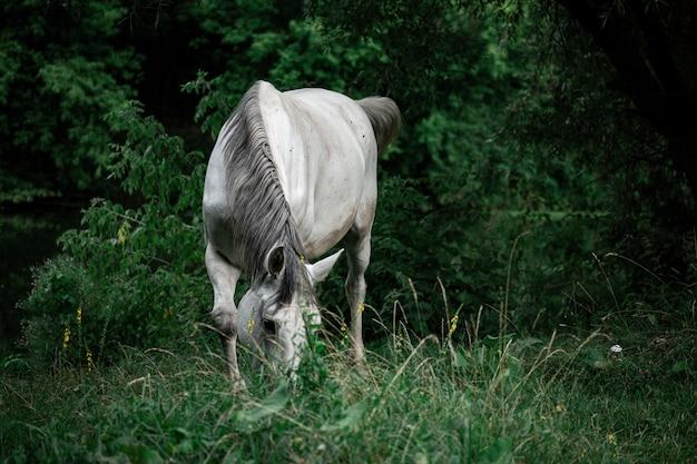 Крупным планом красивая белая лошадь на травянистом поле с деревьями на заднем плане