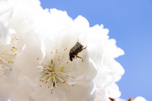 흰 꽃에 벌의 근접 촬영