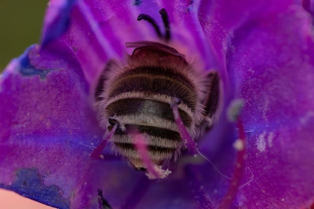 꿀을 마시는 정원에서 활기찬 데이지 꽃에 꿀벌의 근접 촬영