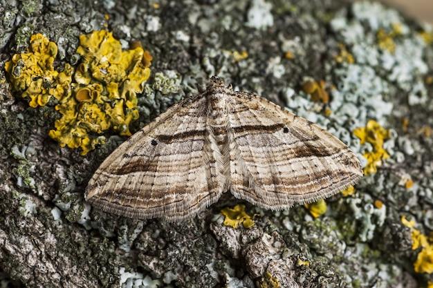 Крупный план изогнутой ковровой бабочки на коре дерева под солнечным светом в дневное время