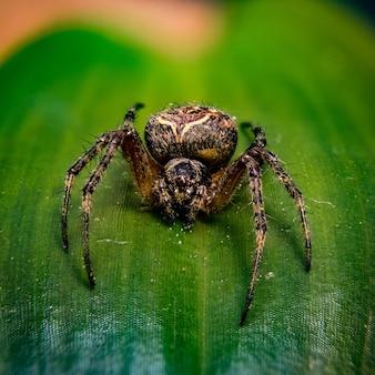 햇빛 아래 나뭇잎에 서 있는 큰 유럽 정원 거미의 근접 촬영