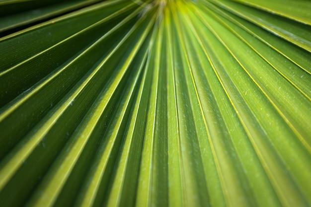 Крупный план ярко-зеленого листа пальмы под ярким тропическим солнцем.