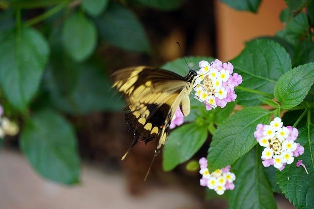 Крупным планом бабочка на красивом цветке в саду