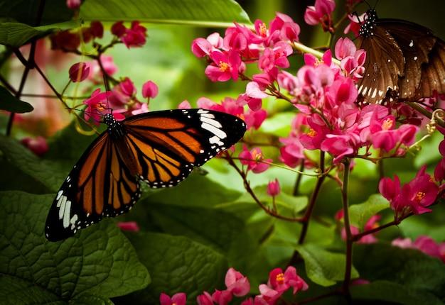 日光の下で花にスジグロカバマドリのクローズアップ