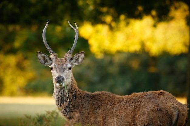 Крупный план оленя в окружении зелени в поле под солнечным светом