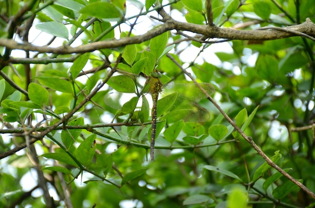 녹색 무성한 단풍과 나무에 자리 잡고 잠자리의 근접 촬영