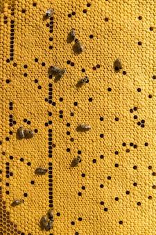 それらの上に蜂と蜂蜜のワックスハニカムとフレームのクローズアップ。養蜂場のワークフロー。