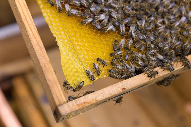 꿀벌이 있는 밀랍 벌집이 있는 프레임의 근접 촬영 프리미엄 사진