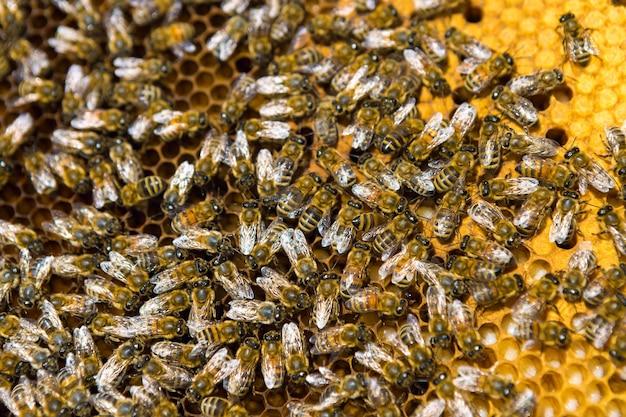 それらの上に蜂と蜂蜜のワックスハニカムとフレームのクローズアップ Premium写真