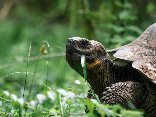 갈라파고스 거북이의 근접 촬영