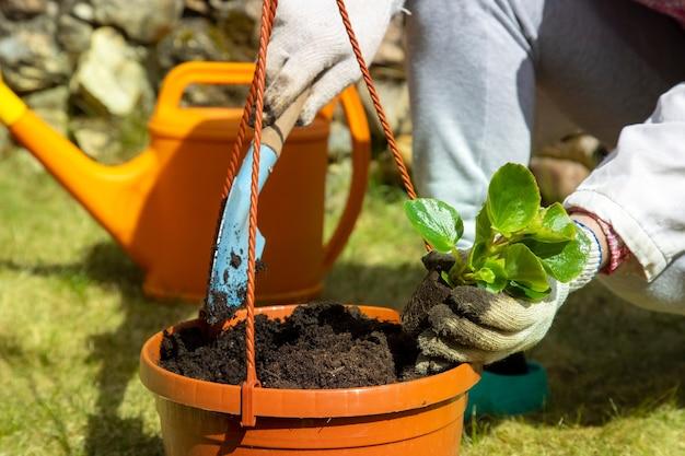 鍋に花を植える家庭用手袋の庭師の手のクローズアップ