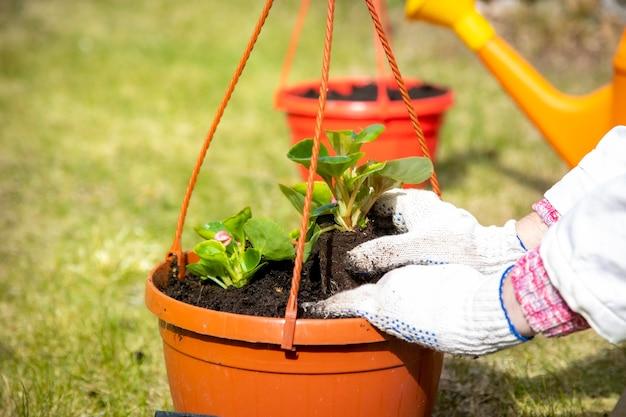 녹색 잔디에 냄비에 꽃을 심는 정원사의 손의 근접 촬영